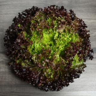 Bataviasalat grün/rot