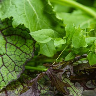 Asia-Salat im Bund Wulksfelde