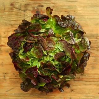 Kopfsalat rot Wulksfelde