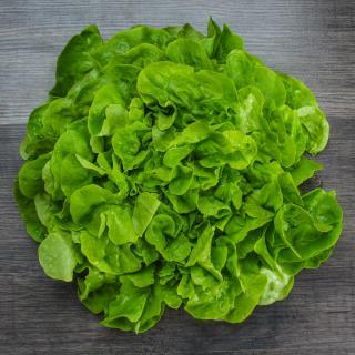 Eichblattsalat grün Wulksfelde