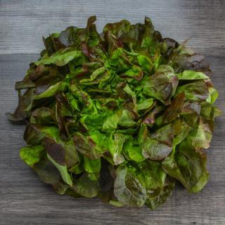 Eichblattsalat rot Wulksfelde