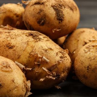Frühkartoffeln 2,5 kg