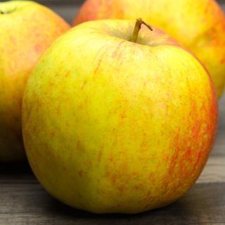Äpfel Delbar Estivale
