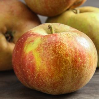 Äpfel Boskoop Bratäpfel