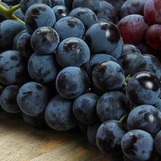 Weintrauben blaue Muskat