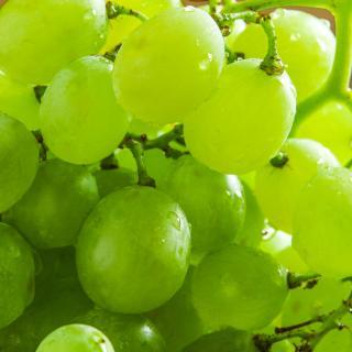 Weintrauben kernlos